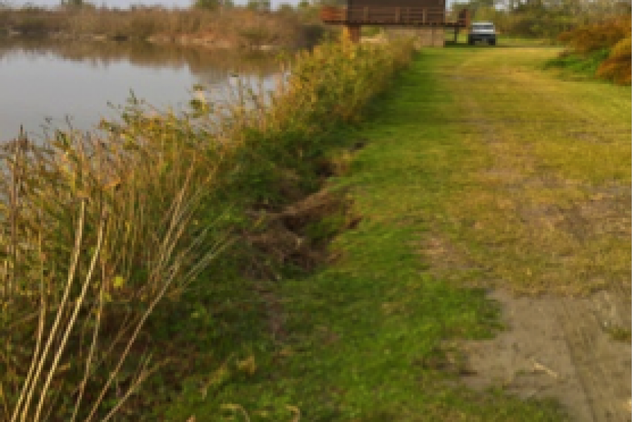 La valorizzazione ambientale della Golena di Ca' Pisani