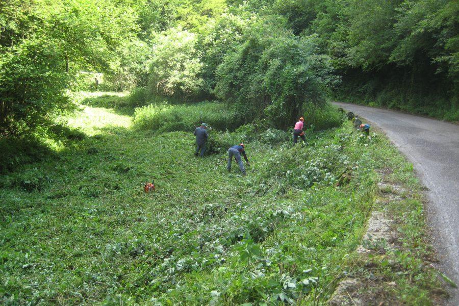 Molteplici interventi forestali nel Veronese