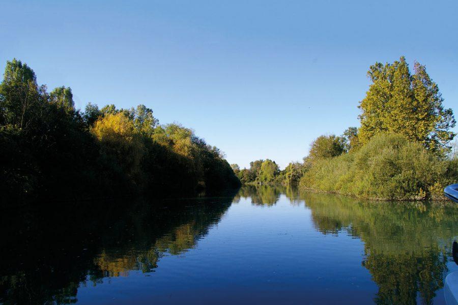 Le specie autoctone tornano a ripopolare il fiume Sile