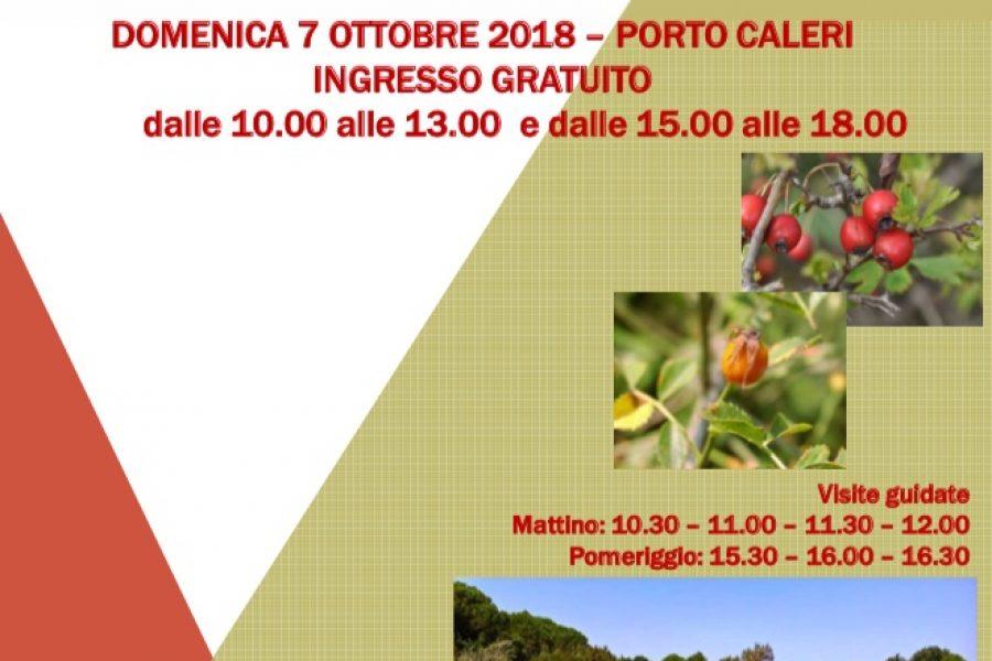 Frutti e colori dell'autunno: oggi ingresso libero e visite guidate al Giardino Botanico Litoraneo del Veneto