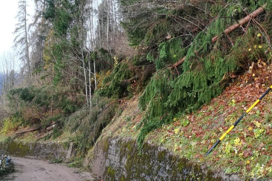 Disintegrato il patrimonio boschivo. 300 milioni di danni per il solo materiale a terra. Inestimabile al momento il valore per la perdita del bosco
