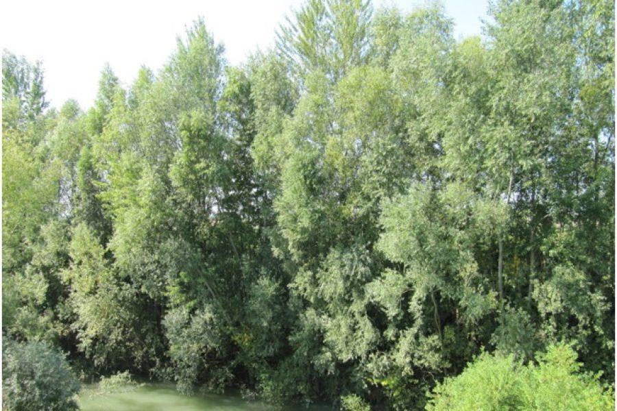 Aggiudicati lavori per 450.000 euro nel circondario idraulico di Este (PD)